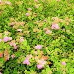 Blumen Busch